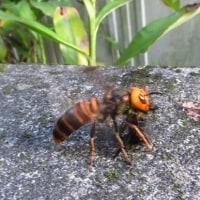 スズメバチが・・・