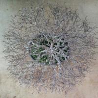 世界盆栽大会に向けて、リハーサル