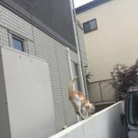 今日見かけた猫さん🐱