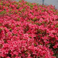 好天の下の花々
