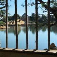 後楽園・沢の池