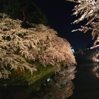 弘前夜桜2017