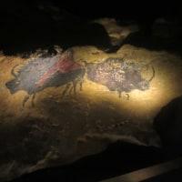 ラスコー展/クロマニョン人が残した洞窟壁画