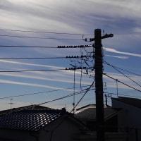 青い空に、飛行機雲が綺麗でした。