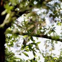 行く鳥・とどまる鳥 もうすぐ四月