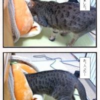 みかん型猫ベットのリベンジ