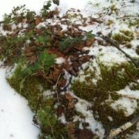 雪解け水と井戸