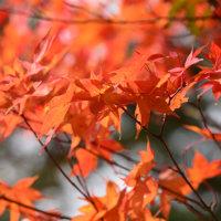 紅葉と富士山と逆さ富士~西湖①