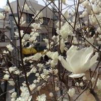 春は芽吹きの季節