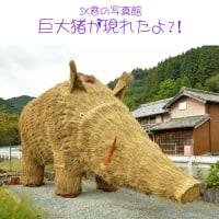 巨大猪が現れたよ!?