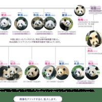 パンダなかんじ!!