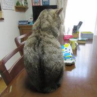 容疑者(猫)T