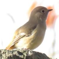 野鳥@大阪城公園