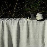 家猫自主トレ中