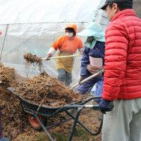 踏み込み温床づくり(1)ハウス内最強のガードマン(カマキリ)自然羽化