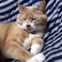 ♂猫だいずのウ◯チ粗相は一進一退【猫日記こむぎ&だいず】2017.05.14