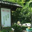 ノスタルジックな大井川鐵道