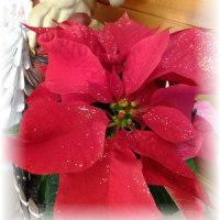 お友達からのクリスマスプレゼント♪