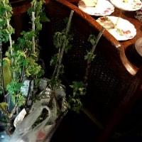 今日の植物たち