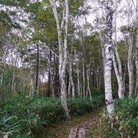 ブナ林のキノコ