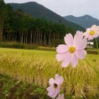 山郷は秋です(^-^)