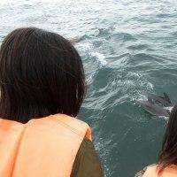 晴れました♪イルカウォッチングはイルカも人も波にのりのり