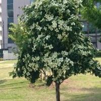 おもしろい木(花)