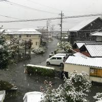 今年の初雪❄