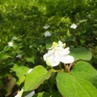 鎌倉探訪・・・北鎌倉から東慶寺、そして明月院