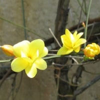 咲いてる花