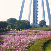 138タワーと秋の花