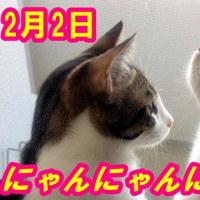 2月22日『にゃんにゃんにゃん 猫の日』♀猫こむぎ&♂猫だいず