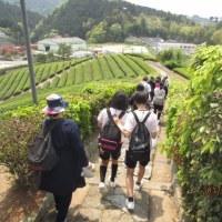 和束 茶源郷ガイドの会 活動報告 5月1日(月)