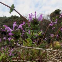 湯の町暮らしに 瀬戸風峠の花々、湯けむりの華をゆるりと楽しみて