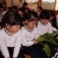 年少組☆今月の野菜&折り紙遊び