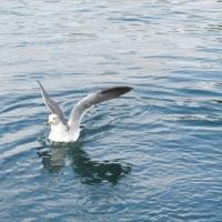 10/17塩湯の後はつくみイルカ島へ行ってきました