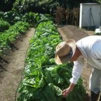宝塚切畑貸し農園・家庭菜園風景