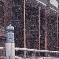 23日の散歩 ( 立本寺から、平野神社、北野天満宮への散歩は梅と雪など )