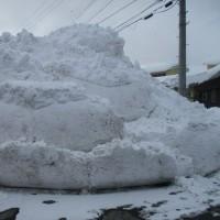 大雪とカラス