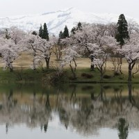 上州・越後の桜名所めぐり