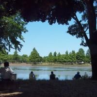 ・ 水元公園 水辺の景観がすばらしい 2017
