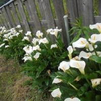 お墓詣りの花