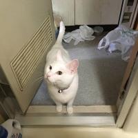 ションベン猫