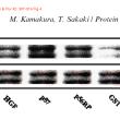 富山県立大学 工学部生物工学科 機能性食品工学 論文捏造疑惑