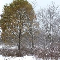 秋に降った雪