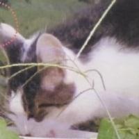 猫の耳カットをご存じですか?