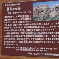 唐音水仙公園