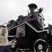 国鉄蒸気機関車 C12 231