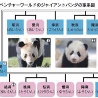 祝 パンダ誕生