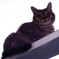寒空にネコは似合わないね。